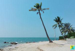 Море и пальма в Таиланде
