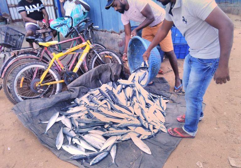 рыбный рынок фото Марина Биджоян