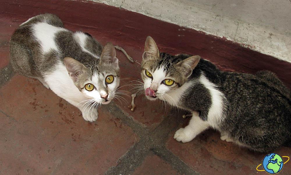 Два бездомных котика в Аланье