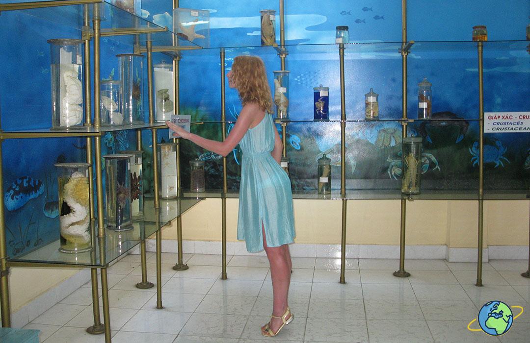 заспиртованные обитатели моря в институте океанографии
